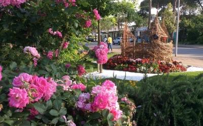 Cervia città fiorita