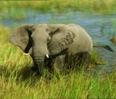 Elefanti, parco Le Dune del Delta