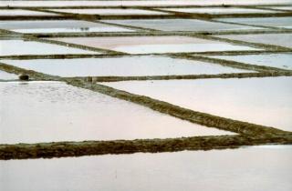 Sapore di Sale a Cervia, il mondo dell'antico Oro Bianco