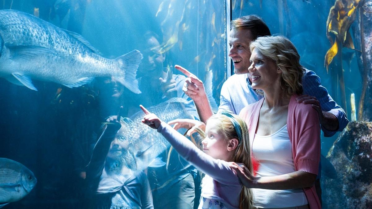 Forfait famille : Hôtel + Aquarium de Cattolica